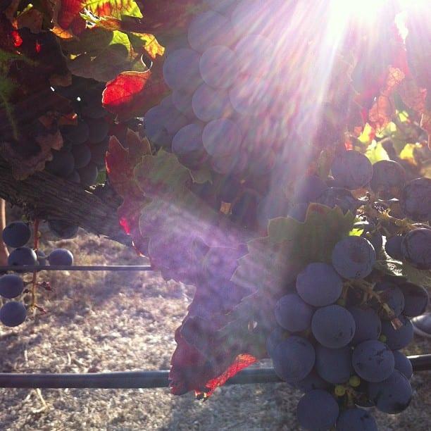 viñas y uva wineadntwits gersonbeltran